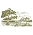 FarmFieldDrawing vector image vector image