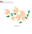Orange Bougainvillea Flowers Flower of Oman vector image vector image