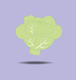 Cabbage Vegetable Icon vector image vector image