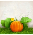 Pumpkin Leaves Grass vector image vector image