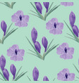 beautiful orchid violet and crocuses flowers vector image