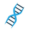 dna human genetic vector image vector image