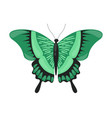 green tropical butterfly beautiful flying insect vector image vector image