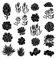 Isolated black silhouettes of succulents vector image vector image