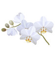 realistic white orchid vector image vector image