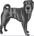 sharpei vector image vector image