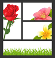 Invitation brochure with beautiful flowers rose vector image vector image