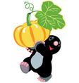 mole holding a pumpkin vector image