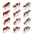 isometric dairy cattle set cows collection vector image vector image