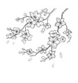 sakura flowers blossom set hand drawn line ink vector image vector image