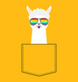 alpaca llama face head in pocket rainbow vector image