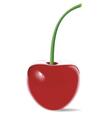 cherry vector image vector image