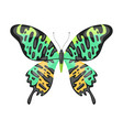 colorful tropical butterfly beautiful flying vector image vector image