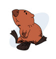 lazy beaver vector image