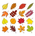 set colorful autumn leaves vector image vector image