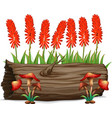 aloevera flowers and mushrooms on white background vector image vector image