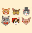 cat heads cute funny cats avatar muzzles vector image vector image