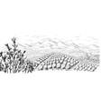 coffee plantation landscape vector image vector image