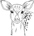 head deer drawn contour black coloring vector image vector image