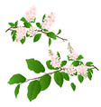 pink lilac branches set natural background vector image vector image