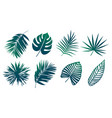 tropical leaves set vector image vector image