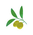 cartoon olive branch with green foliage organic vector image vector image