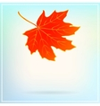 Falling maple leaf on abstract white background vector image vector image