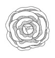rose blossom flower line art vector image