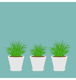 Three pots with growing grass Icon set Blue vector image