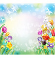 background with multicolor spring flowers vector image vector image