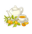 apricot tea vector image vector image