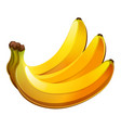 banana icon isolated on white background vector image vector image