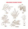 best herbs for dandruff treatment vector image vector image