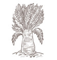 banana tree or palm isolated sketch wild nature vector image vector image
