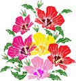 blooming pink red and yellow mallow green leaves vector image