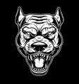 head angry pitbull in vintage monochrome style vector image