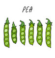 peeled green pea pod healthy bio vegetarian food vector image vector image
