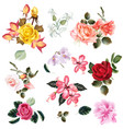 big set of realistic flowers for design vector image
