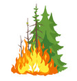 burning forest vector image vector image