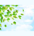 spring background with fresh green leaves vector image vector image