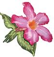Adenium Desert Rose flower and leaves Sketch on a vector image