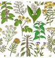 colored pattern with medicinal plants in hand vector image vector image