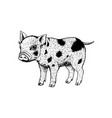 hand drawn pig black white sketch vector image