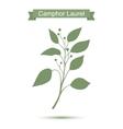 Camphor laurel branch Green silhouette vector image