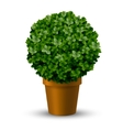 Decorative spherical boxwood in a pot vector image vector image