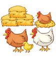 isolated picture chickens and hay vector image vector image