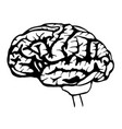 sketch brain vector image vector image