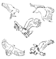 Eagles Sketch pencil Drawing by hand vector image