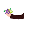 grape in hand vector image