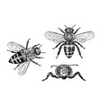 bee and honey mead and insect engraved vector image